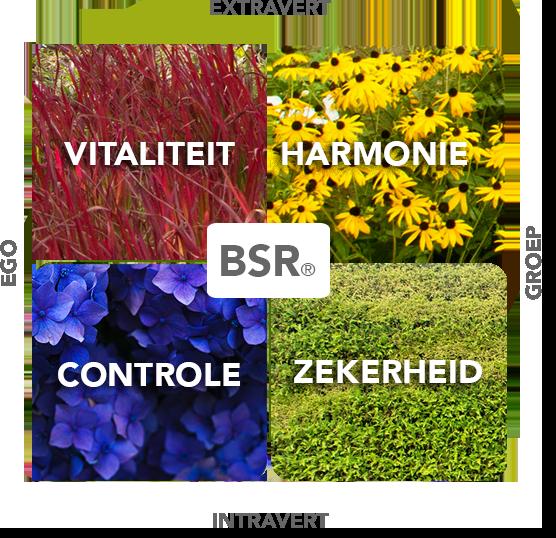 BSR model voor VISSERgroen