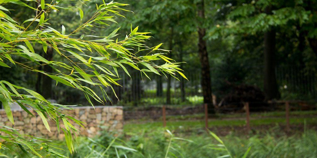 Down memory lane - tuin voor dementerenden