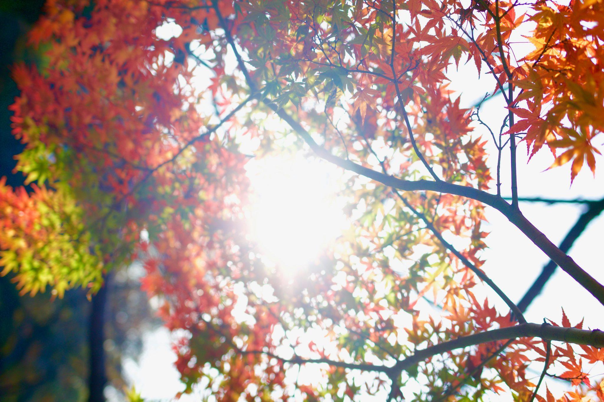 Winterklaar Maken Tuin : Tuin winterklaar maken de juiste voorbereidingen tuinen